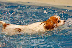 Swim Pool for Dogs